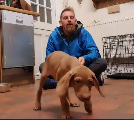 puppy-recall-training
