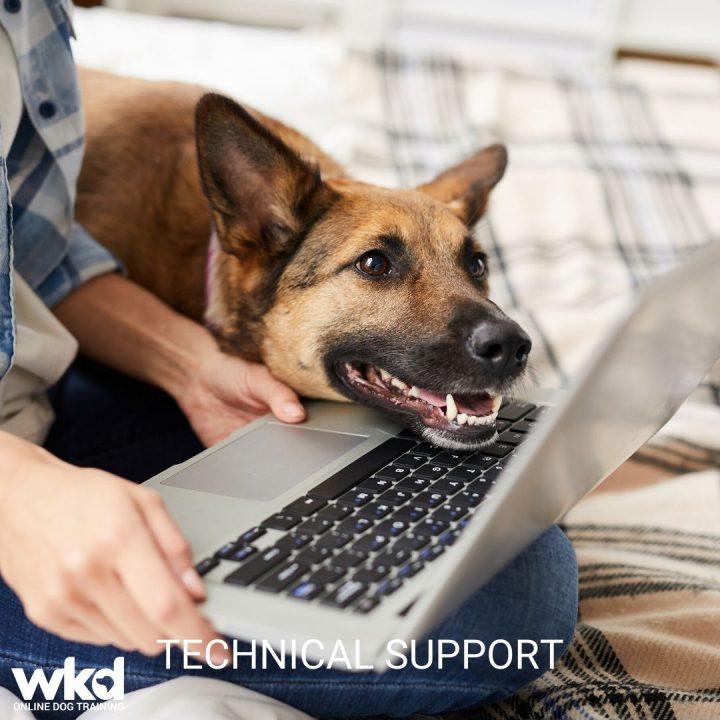 WKD-TECHNICAL-SUPPORT-GERMAN-SHEPHERD-ON-LAPTOP